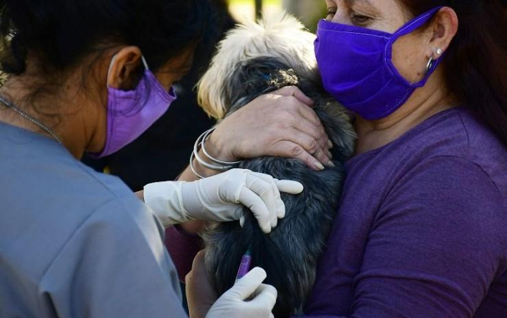 El operativo de Mascotas Saludables visitará 13 barrios en el mes de agosto