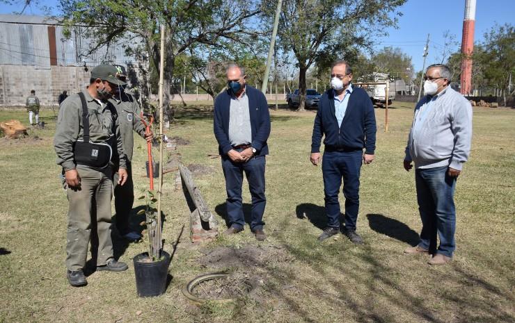 Por una ciudad sustentable: la Municipalidad fortalece la plantación de árboles