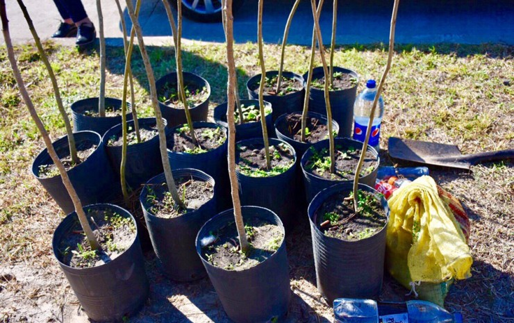 Jóvenes del barrio Apipé fabricarán cestos ecológicos y plantarán árboles autóctonos